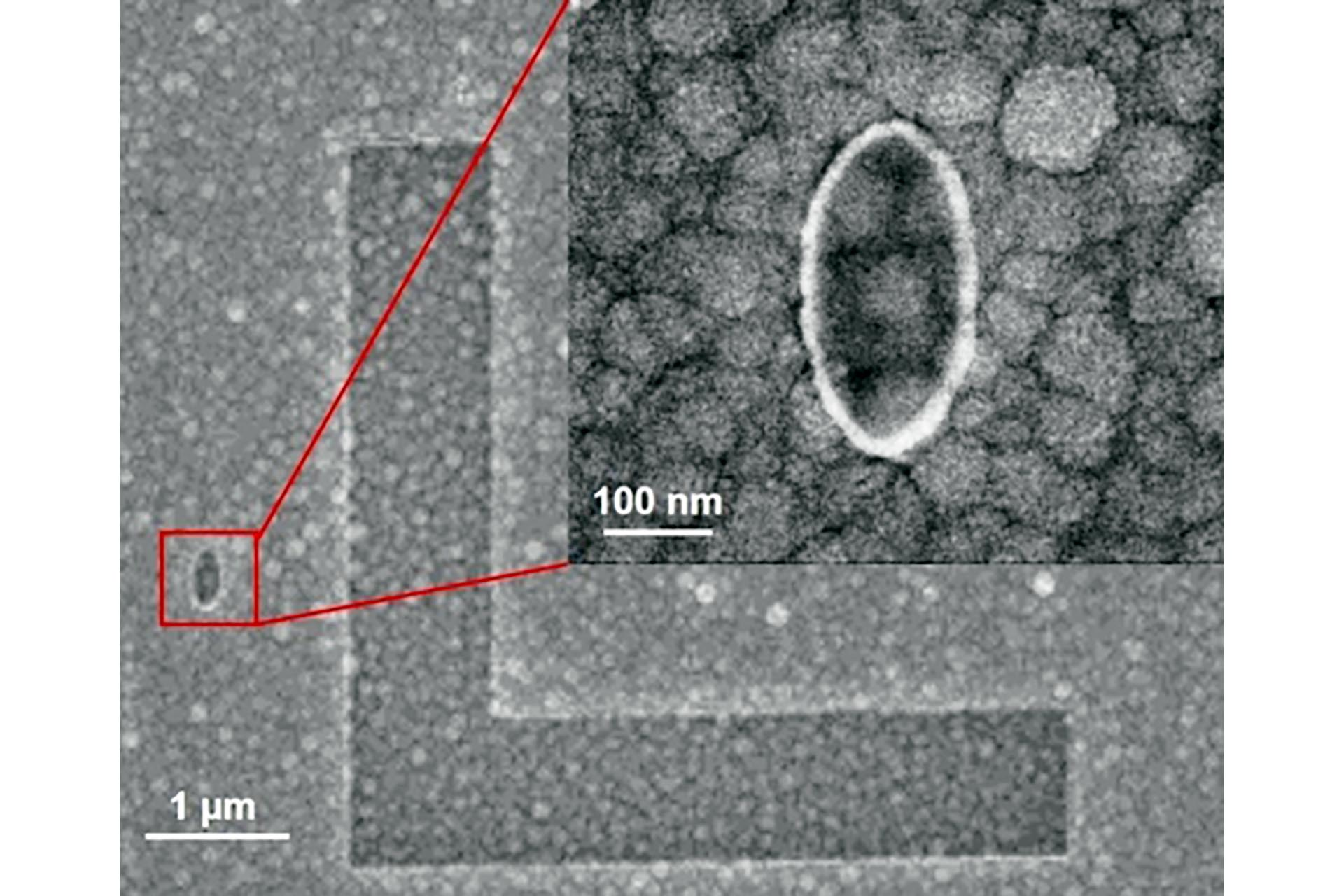 An ultra-high resolution lift-off process was applied after NanoFrazor lithography in PPA to deposit well defined ellipses made of SiO2 on top of a granular magnetic material.